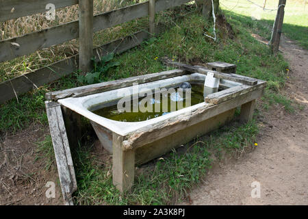 An old bath being used on the farm as a water trough for the animals