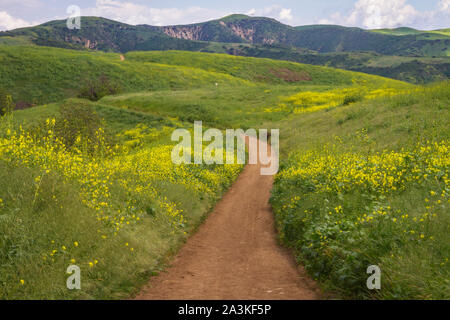 Hiking through Chino Hills State Park during the Spring bloom. In Southern California - Stock Photo