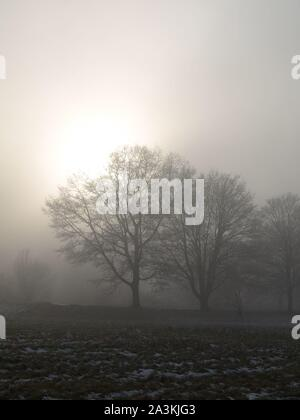 Foggy morning, the sun trying to break through and silhouetting the trees - Stock Photo
