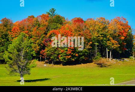 Montreal,Quebec,Canada,September 29,2019.Autumn scenery in a park reserve in Montebello,Quebec,Canada.Credit:Mario Beauregard/Alamy News - Stock Photo