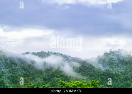 landscape view on the high mountain see many trees and white fog above the land in khao lak Thailand, - Stock Photo