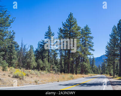 Tall green pine trees stand beside asphalt road in high mountains of southern California. - Stock Photo