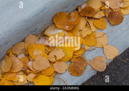Fallen Aspen tree leaves collecting on the edge of a road in the mountain town of Banff Alberta Canada - Stock Photo
