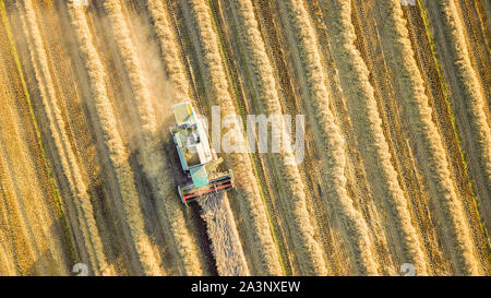 aerial drone view of combine harvester in Northumberland wheat fields - Stock Photo