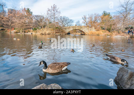 New York City, NY, USA - 25th, December, 2018 - Beautiful cold sunny day in Central Park lake with ducks near Gapstow Bridge, Manhattan.