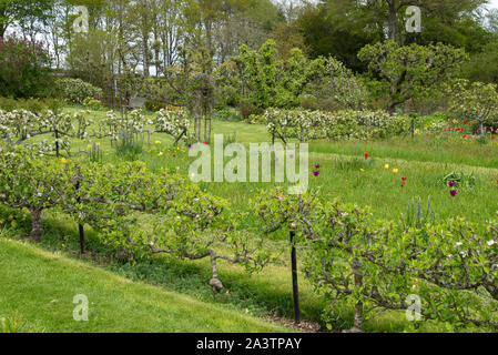 A spring day at Hergest Croft gardens near Kington in Herefordshire, England. - Stock Photo