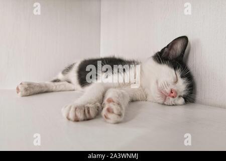 cute kitten sleeping in a box - Stock Photo