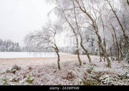 Bog lake with frosted birch trees - Stock Photo