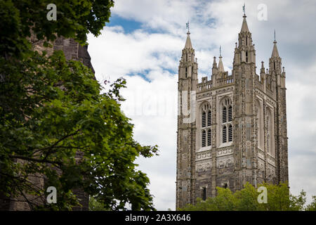 Cleveland Tower, Princeton University; ivy and greenery in foreground - Stock Photo