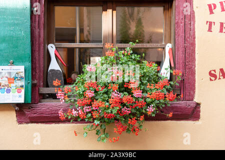 Pretty window with shutters and geranium flowers in a window box on an old building in Alsace France - Stock Photo
