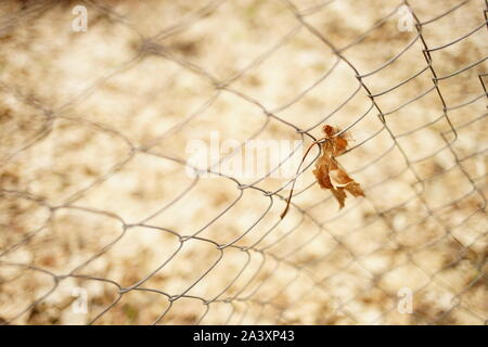 Old dry maple leaf in mesh fence. Autumn season. - Stock Photo
