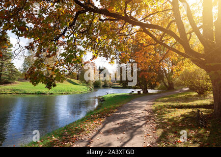 Autumn landscape, city park on a sunny autumn day. Park path covered with fallen maple leaves - Stock Photo