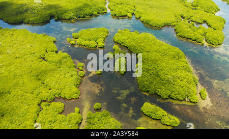 Aerial view of rivers in tropical mangrove forests. Mangrove landscape, Siargao,Philippines. - Stock Photo