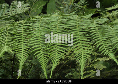Close up of fern leaves - Stock Photo