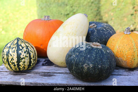 A group of different pumpkins and gourds on a wooden table outside - Stock Photo