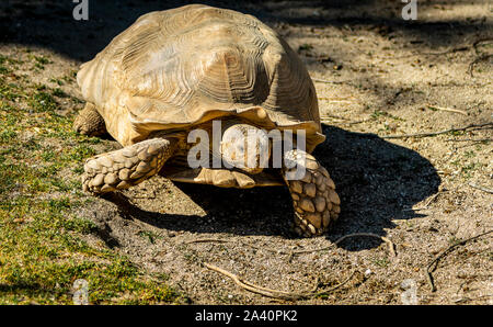 Turtle walking and sunbathing at the zoo - Stock Photo