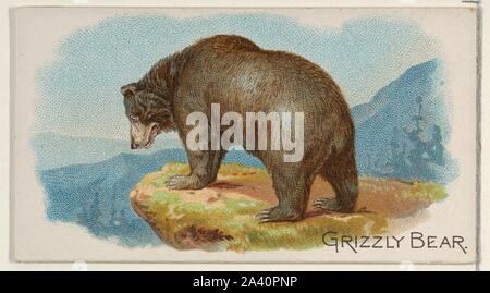 Grizzly Bear, from the Wild Animals of the World series (N25) for Allen & Ginter Cigarettes.jpg - 2A40PPX - Stock Photo