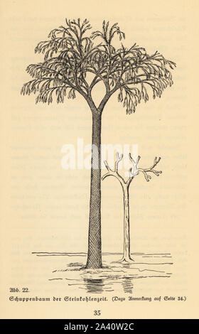 Extinct scale tree, Lepidodendron of the Carboniferous era. Illustration from Wilhelm Bolsche's Das Leben der Urwelt, Prehistoric Life, Georg Dollheimer, Leipzig, 1932. - Stock Photo