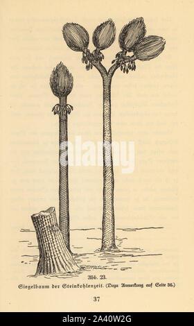 Extinct arborescent plant, Sigillaria genus, of the Carboniferous era. Coal forest era. Illustration from Wilhelm Bolsche's Das Leben der Urwelt, Prehistoric Life, Georg Dollheimer, Leipzig, 1932. - Stock Photo