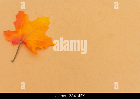 Warm fall seasonal orange  flatlay with festive maple leaf for open concept and copy space availability. - Stock Photo