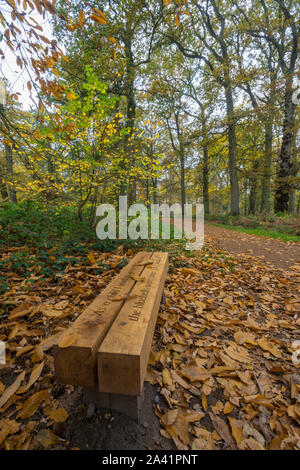 a wooden bench at the side of a leaf covered track or trail in woodland on the blickling estate in Norfolk in the autumn season. - Stock Photo