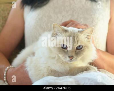 cat face with blue eyes - Stock Photo