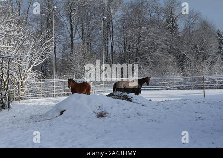 horses on a filed in snow - Stock Photo