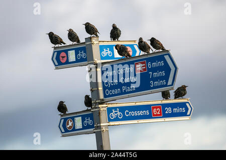 Southport, Merseyside. UK Weather. 12th October, 2019. Early morning rain followed by brighter conditions in the towresort as starlings gather on the directional signs to warm up in the sun. Credit: MediaWorldImages/Alamy Live News - Stock Photo