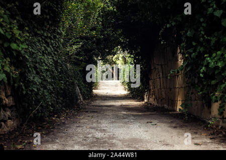 An alley in the park