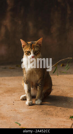Red street cat sits on a stone road in the city - Stock Photo