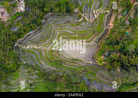 Aerial drone image of Tegallalang rice paddy fields, near Ubud in Bali, Indonesia - Stock Photo