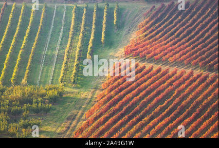 Autumn vineyards landscape. Geometric shapes and textures