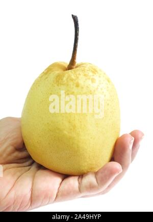 Fresh Fruit, Hand Hodling Sweet Nashi Pear, Asian Pear or Pyrus Pyrifolia Fruit Isolated on White Background. - Stock Photo
