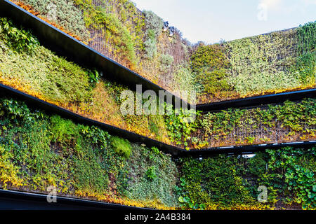 Internal Corner Of Vertical Green Wall With Lighting. - Stock Photo