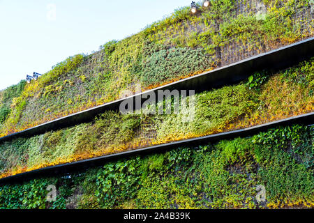 Texture Of Vertical Green Wall And Wash Of Lighting. - Stock Photo