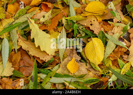 Texture of fallen leaves of different tree species on the ground. - Stock Photo