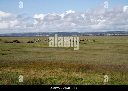 The Loughor estuary and the North Gower Peninsula from Penclawydd, Wales UK, with herd of wild marsh horses. - Stock Photo