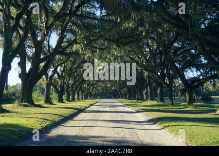 Dirt road lined with Live Oak trees - Stock Photo