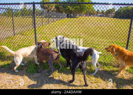 Group of dogs on either side of a fence in a public park, United States - Stock Photo