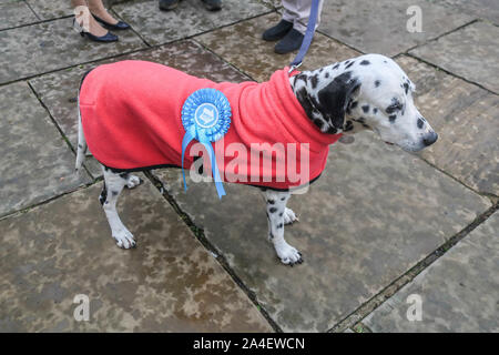 London, UK - 14 October 2019.  A dog with a Brexit Party rosette  outside Parliament after the Queen's speech by Her Majesty Elizabeth II unveiled the government's legislative programme. Credit: amer ghazzal/Alamy Live News - Stock Photo