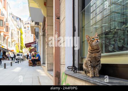 A curious, cute stray tabby cat relaxes on an exterior window ledge on a busy touristic street in the Galata district of Istanbul, Turkey. - Stock Photo