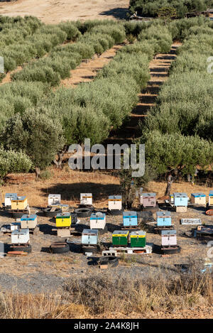 Kato Gouves, Crete, Greece. October 2019.  Olive trees and bee hives on farmland close to Gouves on the northern coast. - Stock Photo