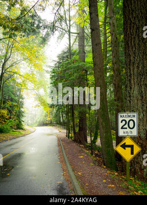A foggy forest road (Capilano Park Road) in the coastal rainforest in Capilano River Regional Park in North Vancouver, British Columbia, Canada. - Stock Photo