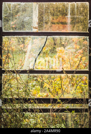Dirty cracked Windows of an old abandoned greenhouse with rusty frames. - Stock Photo