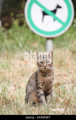A stray tabby cat is sitting on the lawn next to the dog walking ban - Stock Photo
