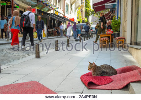 A stray tabby cat sits on a crumpled rug outside a shop in the Galata Karakoy district of Istanbul Turkey as tourists and Turks pass by on the street - Stock Photo