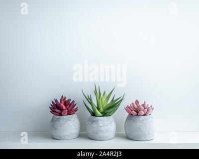 Concrete pots minimal style. Pink, red and green succulent plants in modern round concrete planters on wooden shelf isolated on white background with - Stock Photo