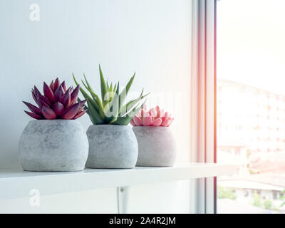 Concrete pots minimal style. Pink, red and green succulent plants in modern round concrete planters on wooden shelf near the window glass with sun lig - Stock Photo