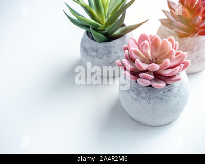 Concrete pots minimal style. Pink, red and green succulent plants in modern round concrete planters on white background with copy space, top view. - Stock Photo