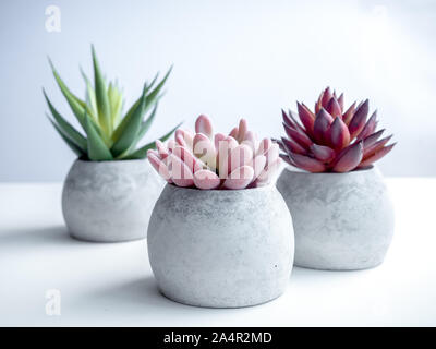 Concrete pots minimal style. Close-up pink, red and green succulent plants in modern round concrete planters on white background. - Stock Photo